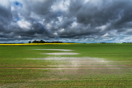 Wet field after heavy rain.