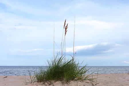 Grass on the beach.