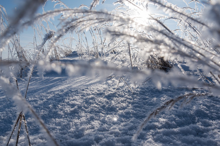 Hoarfrost on dry grass in cold winter morning.