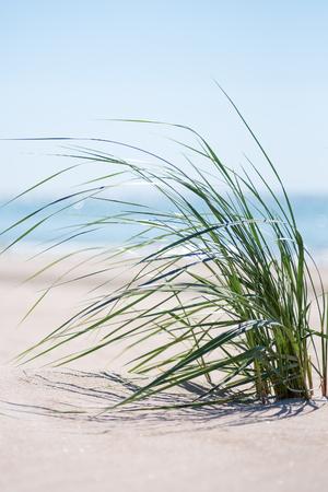 Green grass on Baltic sea beach. Stockfoto