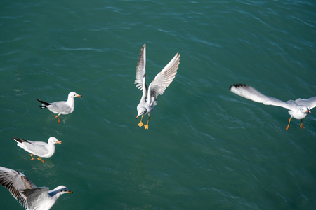 Sea gulls and water.