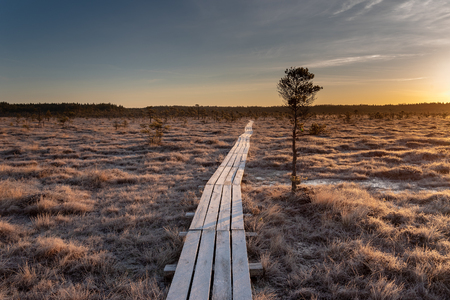 Wooden path in Dunika bog, Latvia.