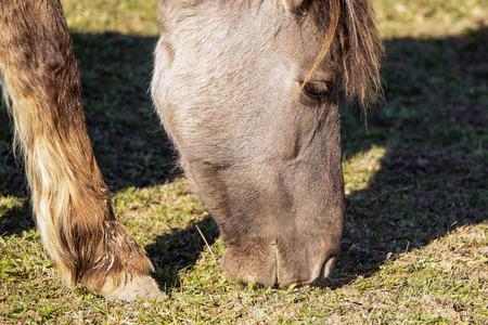Wild horse in pasture.