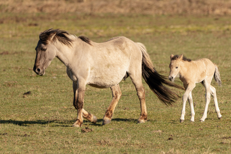 Wild horses in pasture. Stock Photo