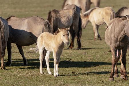 Wild horses in pasture. Фото со стока