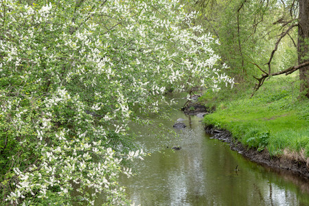 Small river in spring tome. 版權商用圖片