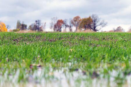 New wheat field in autumn time. Zdjęcie Seryjne