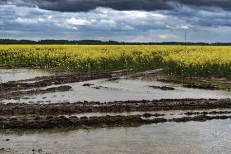 Water and puddles on agricultural field after heavy rain.