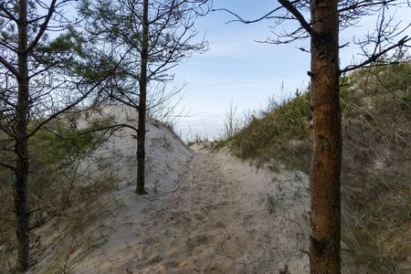 Path to Baltic sea in dunes.