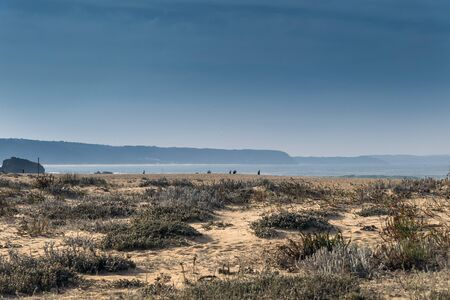 Grass and sand on Nazare North beach, Portugal.