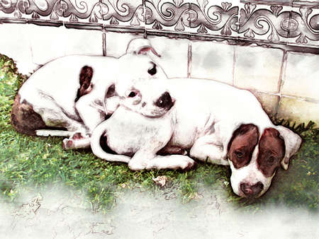 bullterrier: Little Dogs Illustration