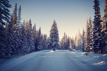 Tree standing alone in the middle of a narrow narrow road covered with snow, Banff National Park, Canada 版權商用圖片