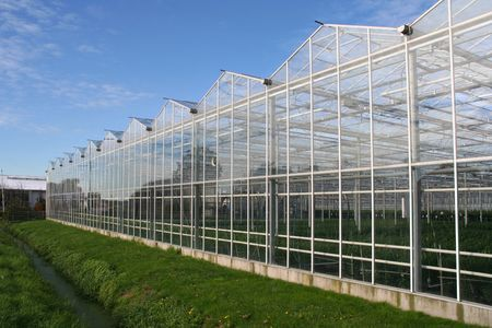 westland: Agricultural glasshouse in the Westland in Holland Stock Photo