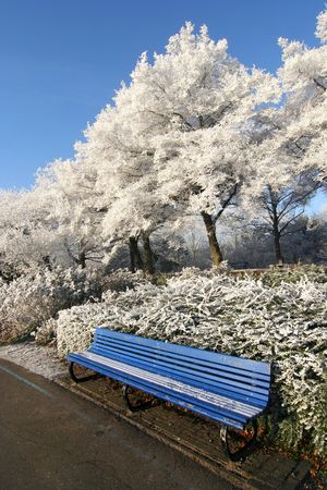 wintry: Bench with frozen trees in wintry park