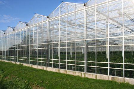 glasshouse: Glasshouse Stock Photo