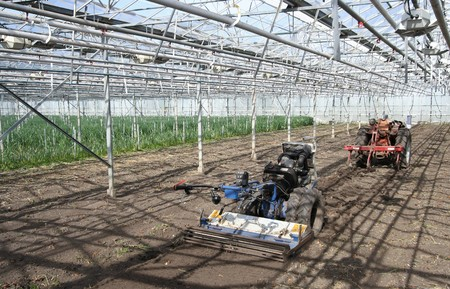 Little tractors in the greenhouse photo