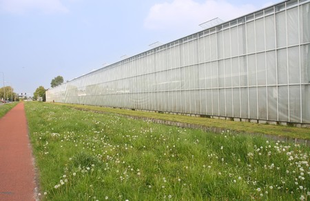 Greenhouses in Holland photo