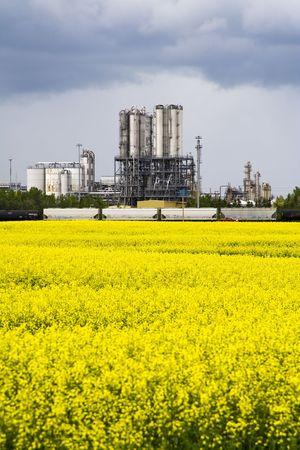 Canola field infront of an industrail plant photo
