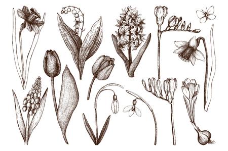 botanical gardens: Botanical illustrations of springtime plants