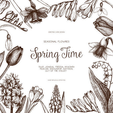 jonquil: Vector design with hand drawn spring flowers