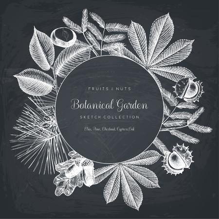 albero nocciolo: Cornice vintage con elementi botanici.