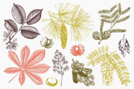 手のベクトル コレクションが木の図を描画