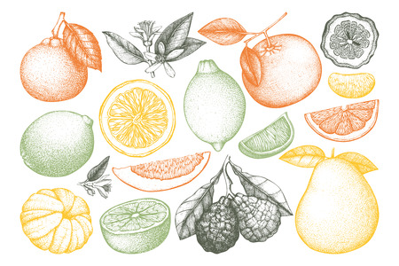 Vintage citrus fruits collection Stock Illustratie