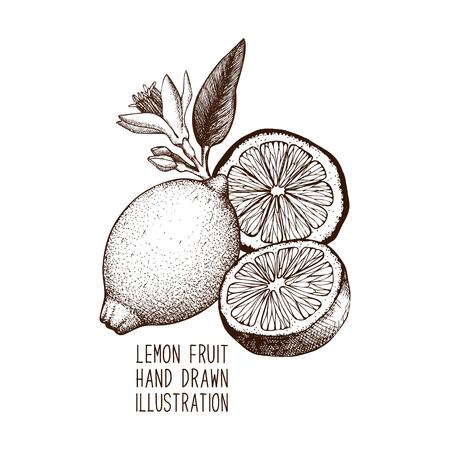 Ink hand drawn lemon sketch.