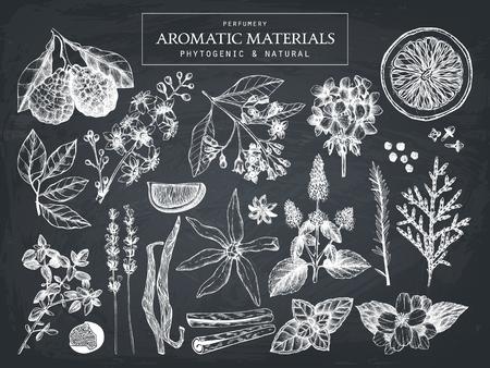 perfumery: Hand drawn perfumery ingredients sketch Illustration