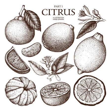 Ink hand drawn citrus plants sketch