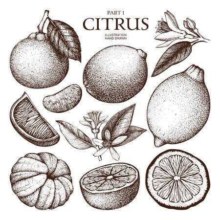 Croquis dessiné à la main en citron dessiné à l'encre