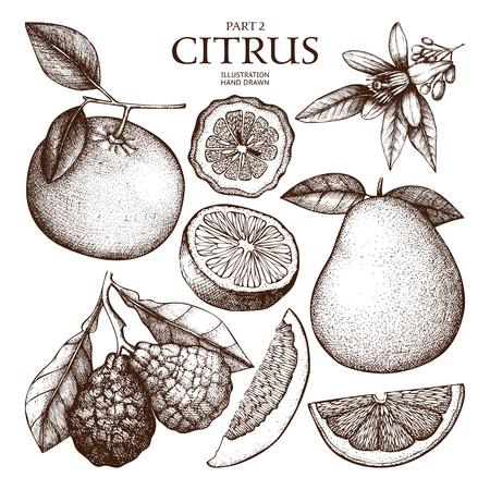 Tinte handgezeichneten Zitruspflanzen Skizze Standard-Bild - 74950676