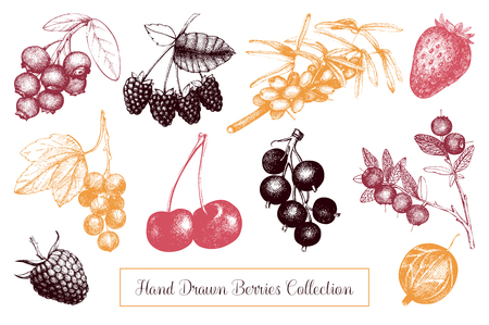 Vintage berry sketches set