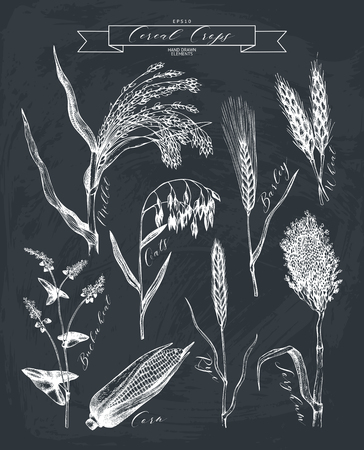 hand drawn agricultural plants sketches. Çizim