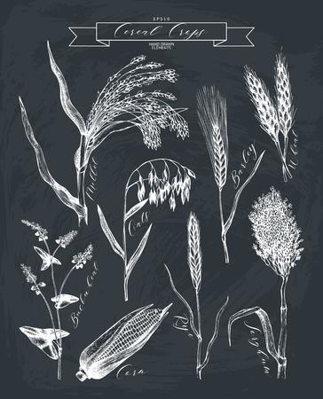 Handgetekende landbouwplanten schetsen.