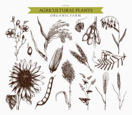 hand drawn agricultural plants sketches. 向量圖像