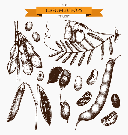 Vintage set of legumes on white