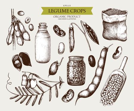 Vintage set of legumes on white