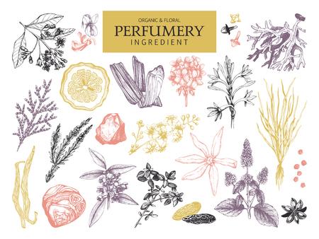 Vintage perfumery and cosmetics illustrations set