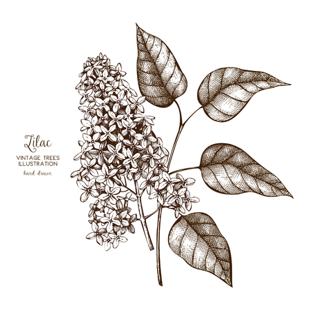 Vector design with lilac tree sketch