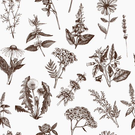 Vector backgroung with hand drawn Herbs.