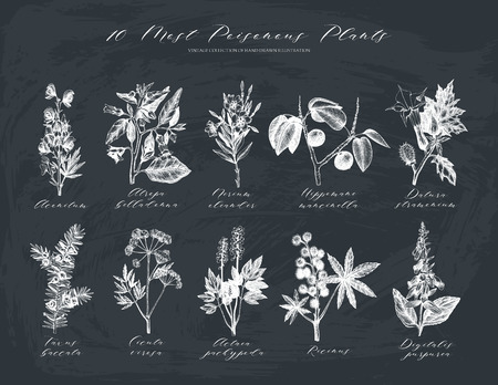 Vector collection of most poisonous plants.
