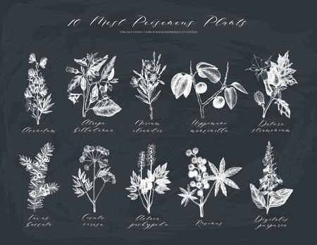 Vector Sammlung der meisten giftigen Pflanzen. Vektorgrafik
