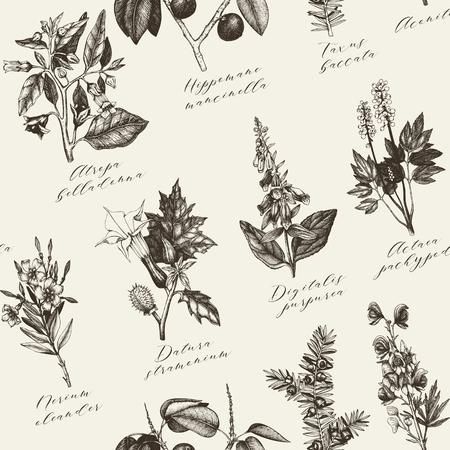 noxious: Vintage noxious plants sketch background.