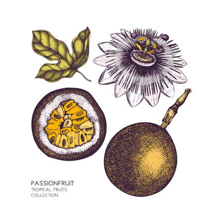 Donkere paarse passie fruit illustratie Stock Illustratie