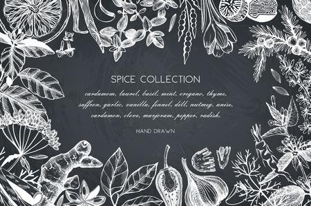 Hand drawn spices and herbs design Ilustração