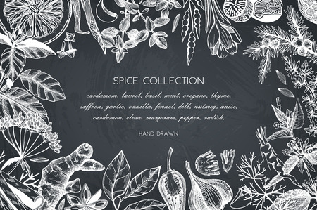 Hand drawn spices and herbs design Illustration