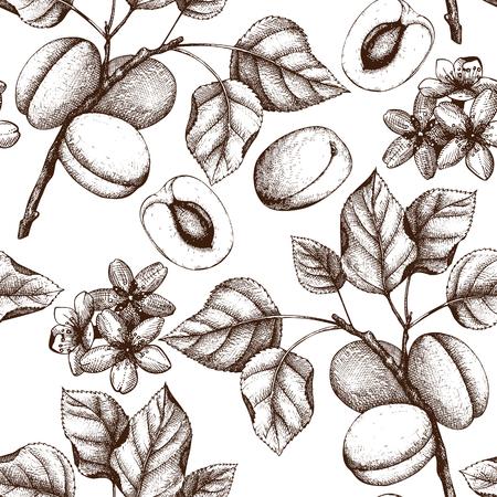 Vector abrikozen uitstekende achtergrond Vector Illustratie