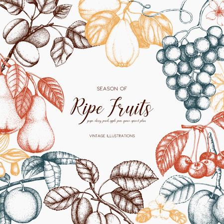 Vintage fruits card design.  イラスト・ベクター素材