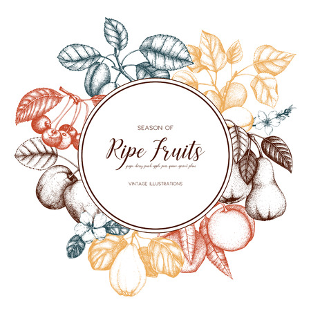 Vintage fruits card design. Illustration